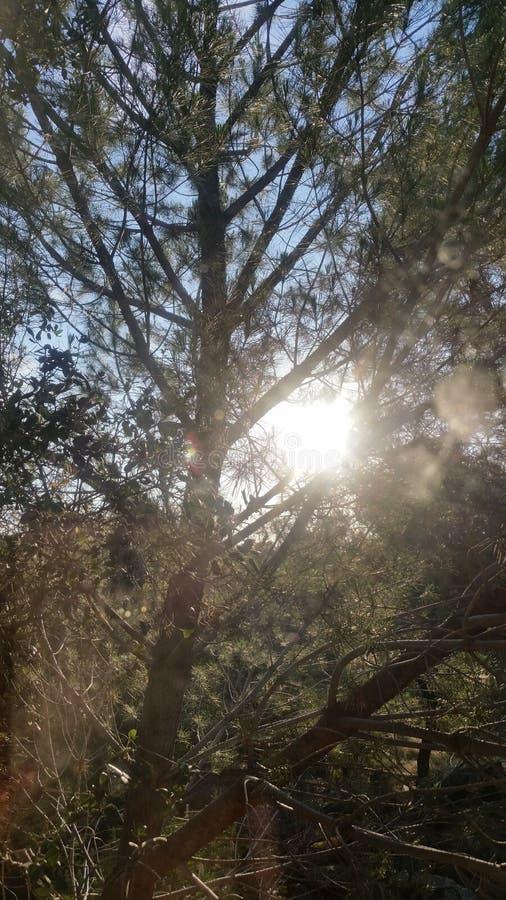 在美丽的鸟云彩之上颜色及早飞行金子早晨本质宜人的平静的反映上升海运一些星期日 图库摄影