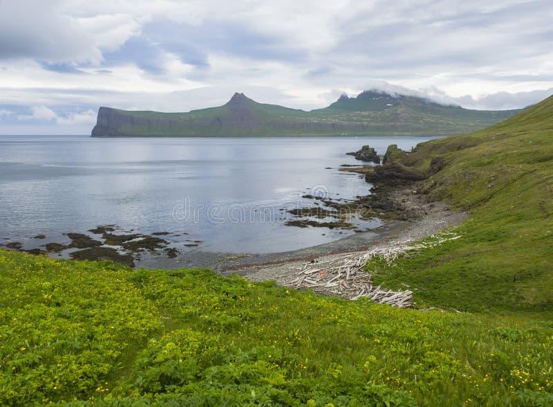 在美丽的Hornbjarg峭壁的风景看法在西部海湾,遥远的自然保护Hornstrandir在冰岛,有豪华的绿草的mea 免版税图库摄影