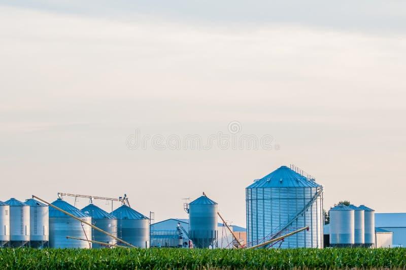 在美国农场在肯塔基 免版税图库摄影