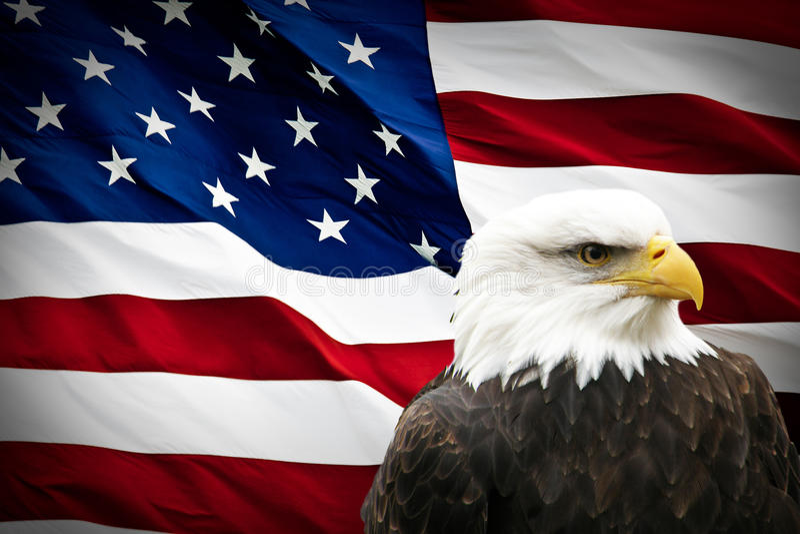 在美国国旗的北美洲白头鹰 免版税库存图片