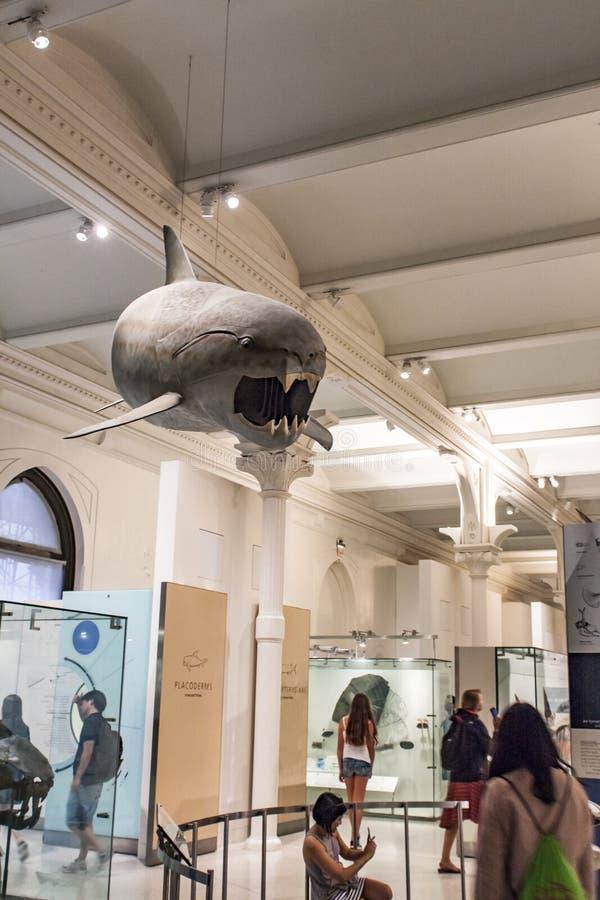 在美国自然历史博物馆的化石鱼在纽约 免版税图库摄影