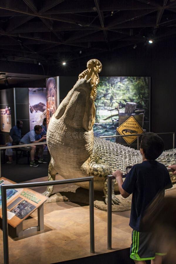 在美国自然历史博物馆的盐水crocodyle在新 库存图片