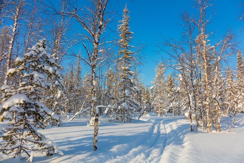 在美好的冬天森林风景的滑雪的足迹 库存图片