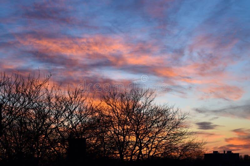 在美好的日落附近的树 免版税库存照片