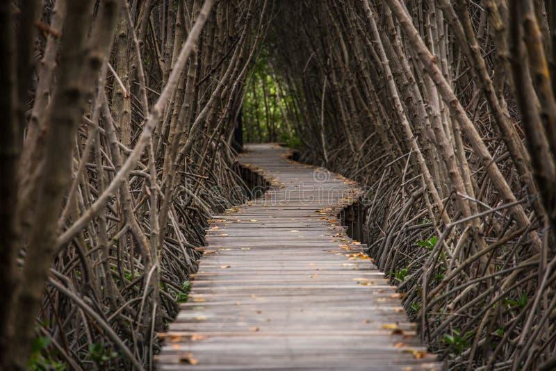 在美洲红树森林里面的木走道 库存照片