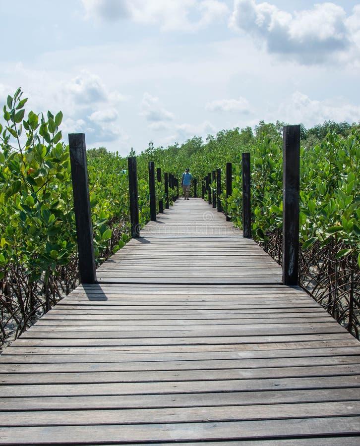 在美洲红树的木桥梁在thung橛皮带,泰国的方式研究自然 免版税图库摄影