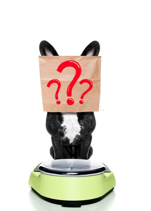 在羞愧的等级的狗 免版税库存照片