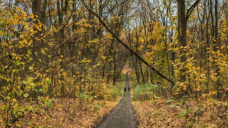 在老公园结合走沿秋天胡同 免版税库存图片