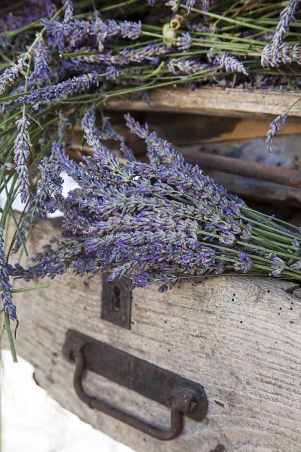 在老土气条板箱的淡紫色花 免版税库存照片
