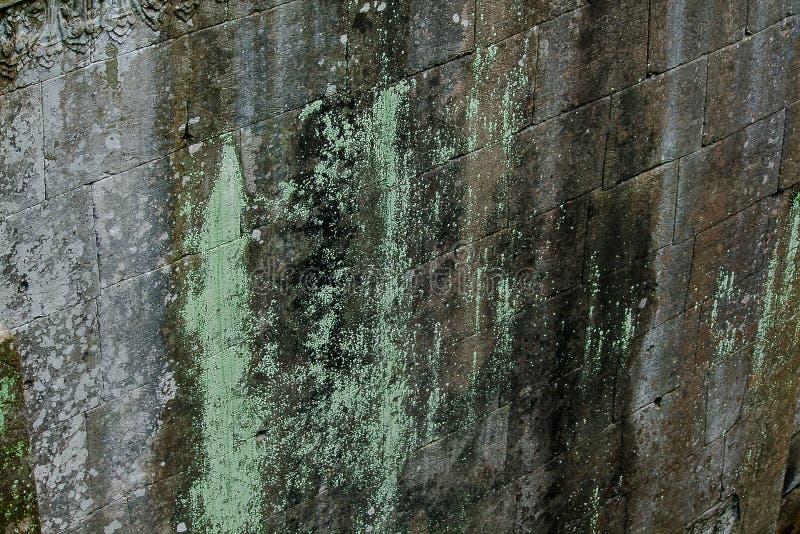 在老城堡的砖的青苔 免版税库存图片