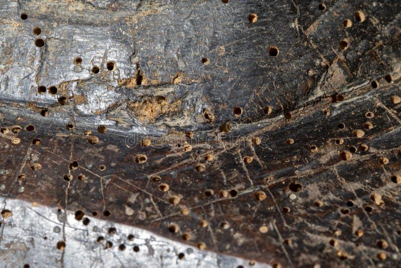 在老家具的蚀船虫孔 免版税库存照片