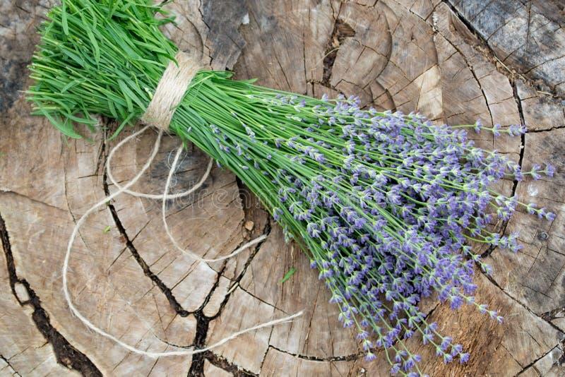 在老木树桩的淡紫色花 图库摄影