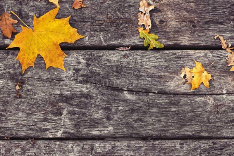 在老木桌上的下落的槭树叶子 秋天背景特写镜头上色常春藤叶子橙红 库存图片