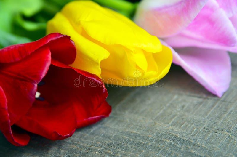 在老木桌上的五颜六色的郁金香 春天郁金香在母亲与空间的` s天开花文本的 免版税库存图片