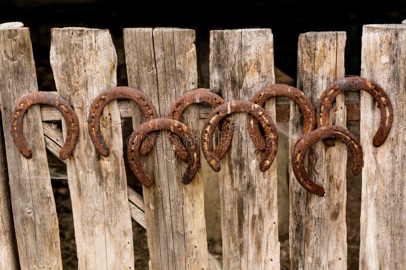 在老木篱芭的马掌 图库摄影