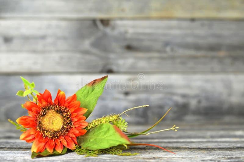 在老木背景的向日葵 库存图片