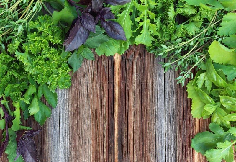 在老木背景的新鲜的草本 库存图片