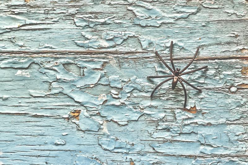 在老木背景的黑蜘蛛 万圣节查出符号白色 库存照片