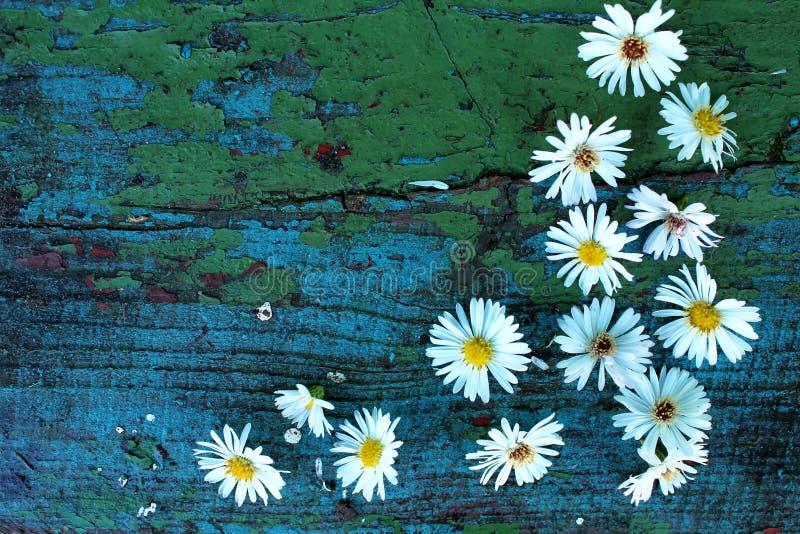 在老木蓝色的白色秋天花 库存图片