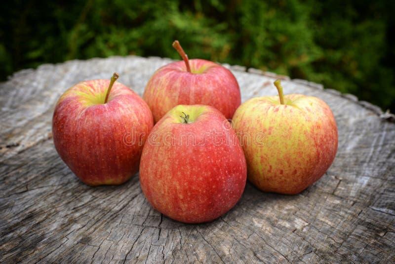 在老木头的新近地摘的苹果 免版税库存照片