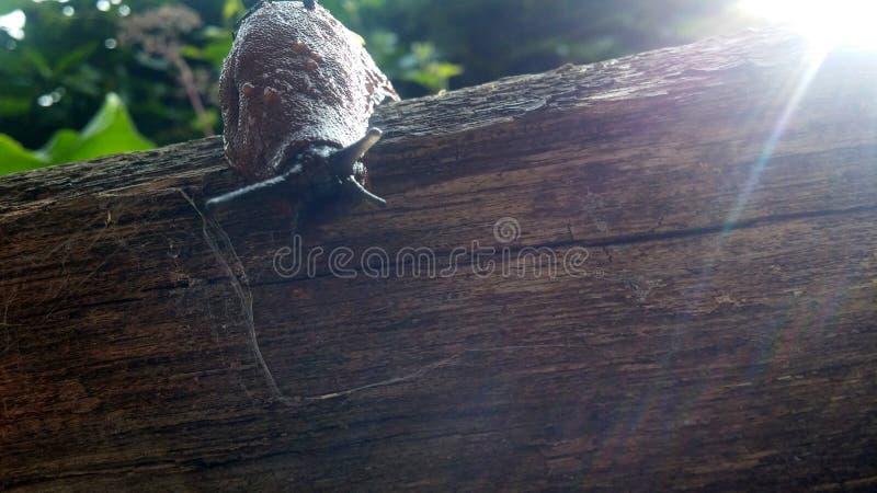 在老木头的赤裸蜗牛