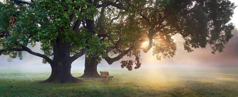 在老橡木秋天下的长凳 库存照片