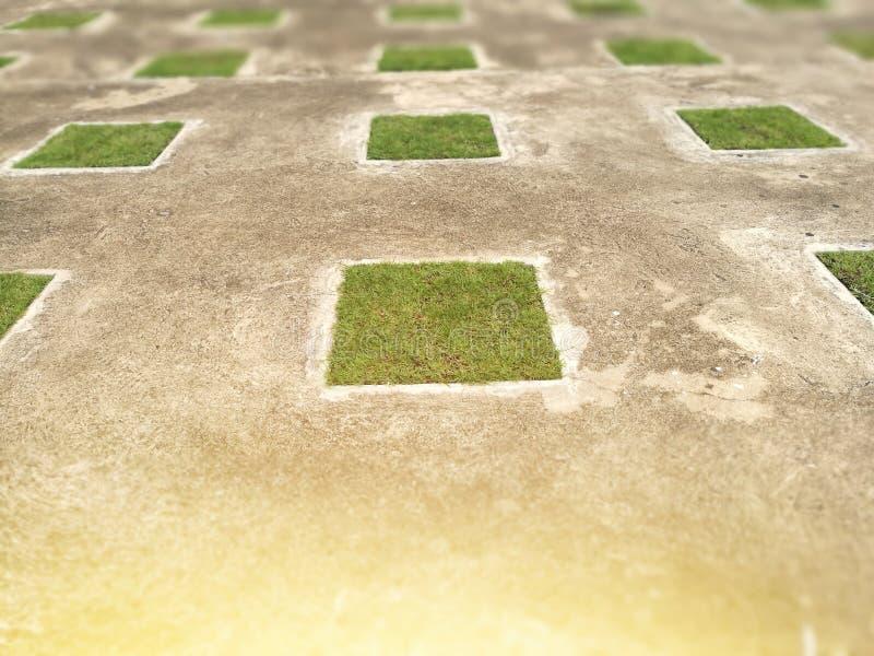 在老水泥地板上的方形的绿草 50mm背景迷离作用射击晚上nikkor当事人端 免版税库存照片