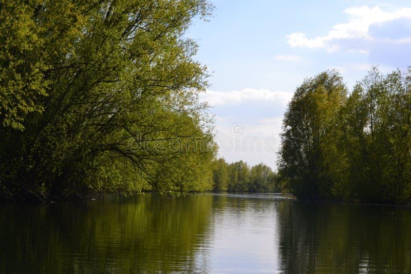 在老河岸的树 库存照片