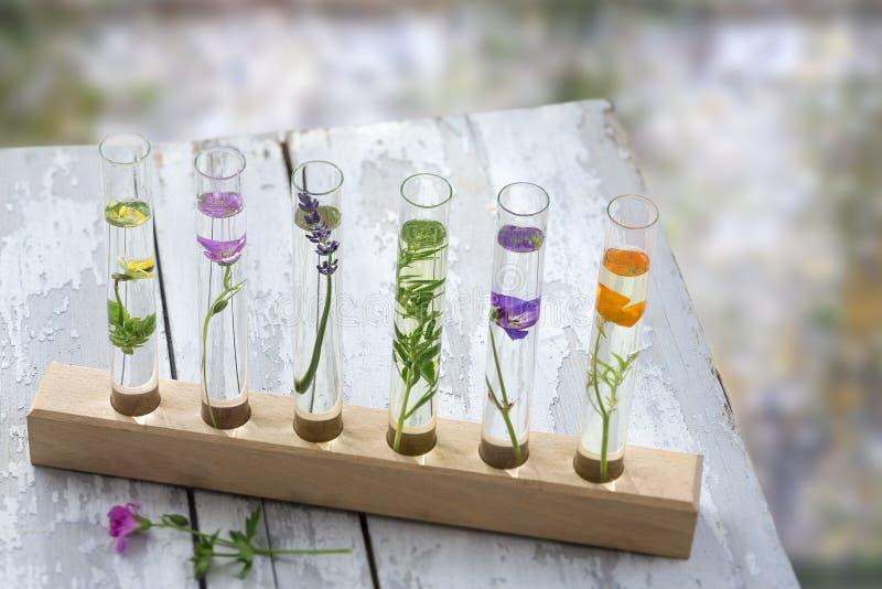 在老灰色木桌、花和植物上试管的在木制支撑在blury背景, 免版税库存照片