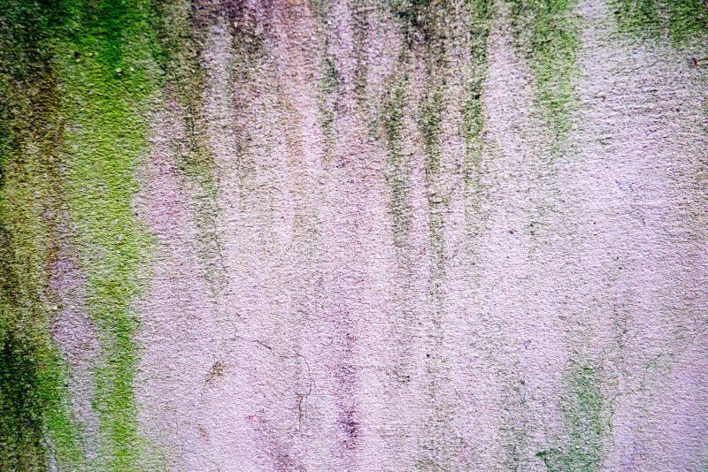 在老灰色水泥地板上的绿色地衣 免版税库存图片