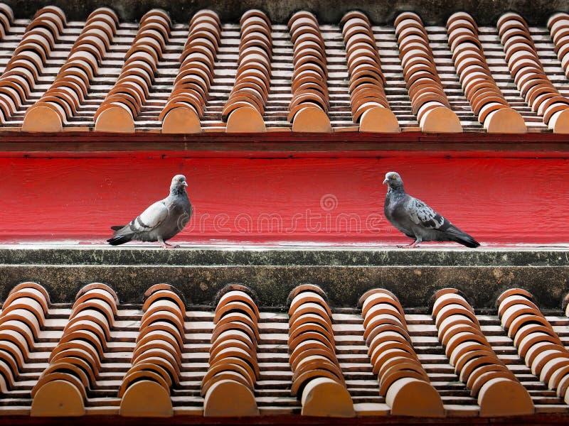 在老牌寺庙瓦的鸽子 图库摄影