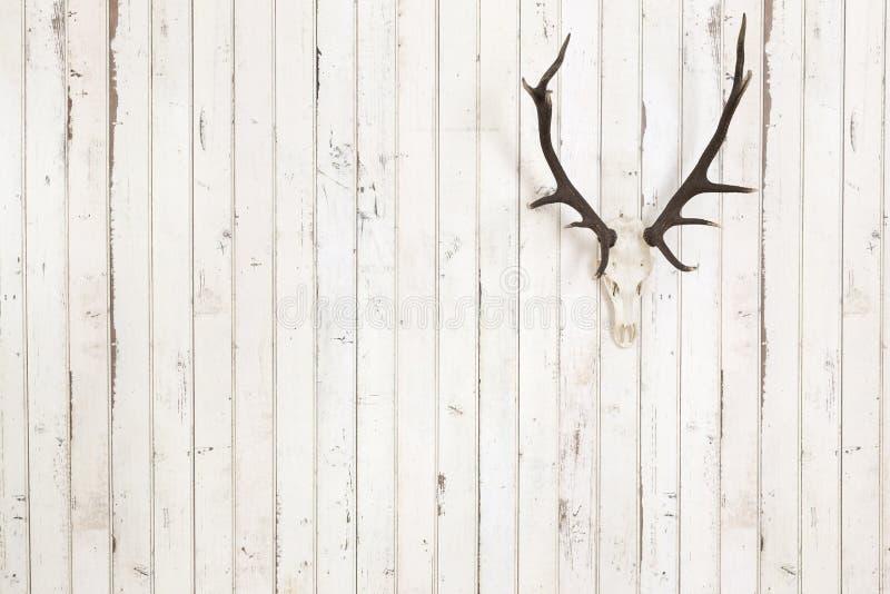 在老白色木墙壁上的鹿鹿角 图库摄影