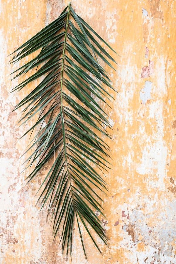 在老葡萄酒古董墙壁上的棕榈分支作为棕枝全日和Easte 库存图片
