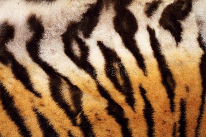 在老虎毛皮的自然样式 免版税库存照片