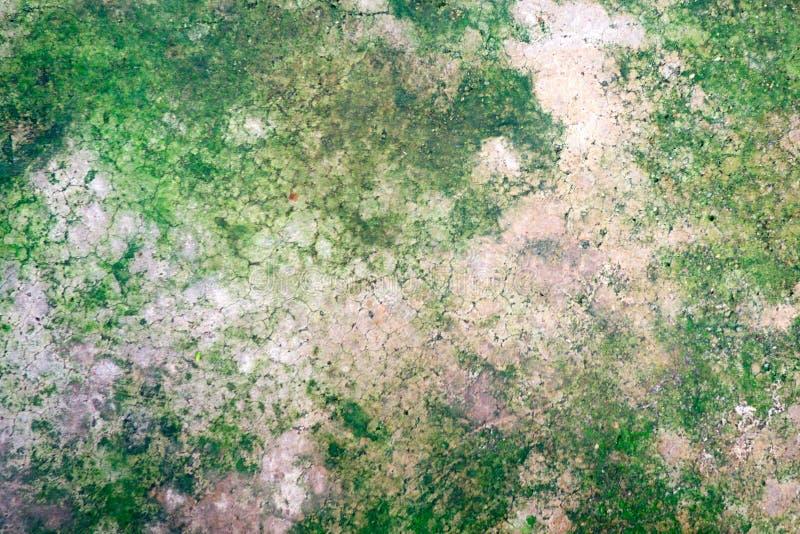 在老裂缝灰色水泥地板上的绿色青苔地衣 免版税库存照片