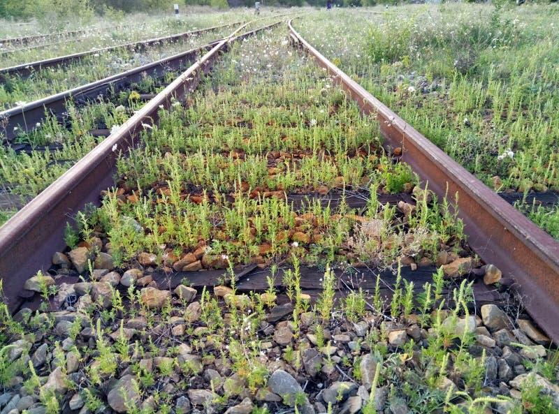 在老铁轨之间的绿草 自然, 库存照片