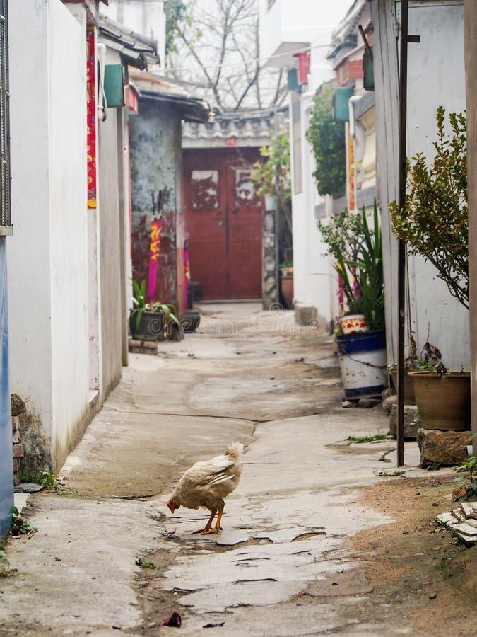 在老镇大理中国街道上的鸡  免版税库存照片