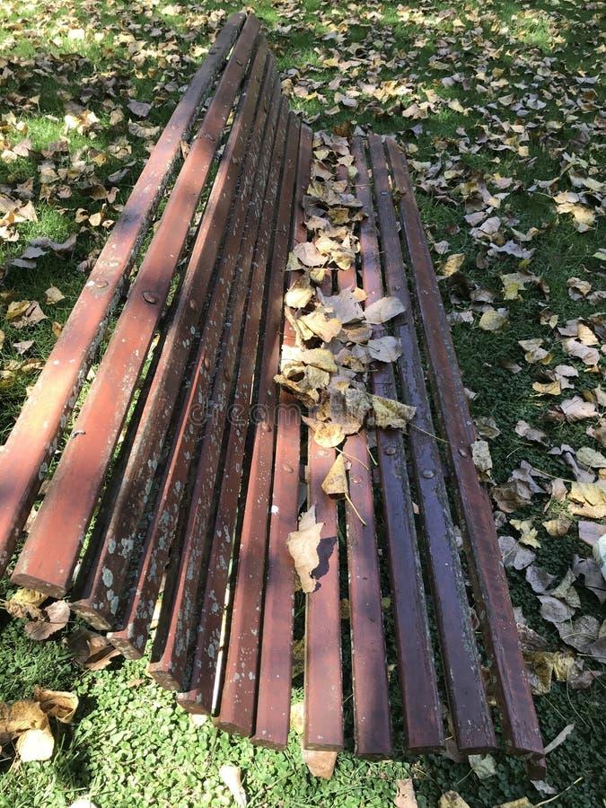 在老长凳的干燥叶子 库存照片