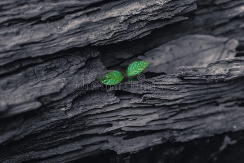 在老黑暗的木头增长的绿色小植物 库存图片