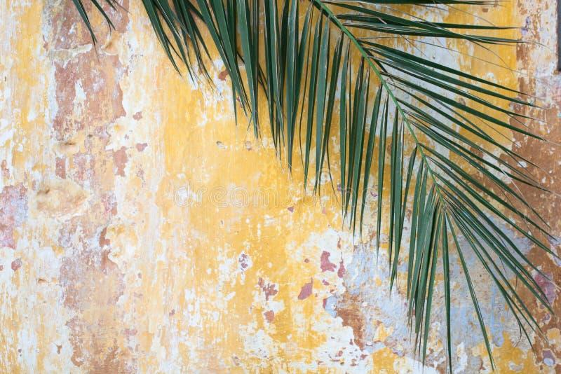 在老破裂的葡萄酒橙色墙壁上的绿色棕榈分支作为touris 库存照片