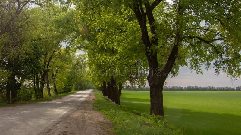 在耕地领域的土壤路,弄脏与阵雨 免版税库存照片