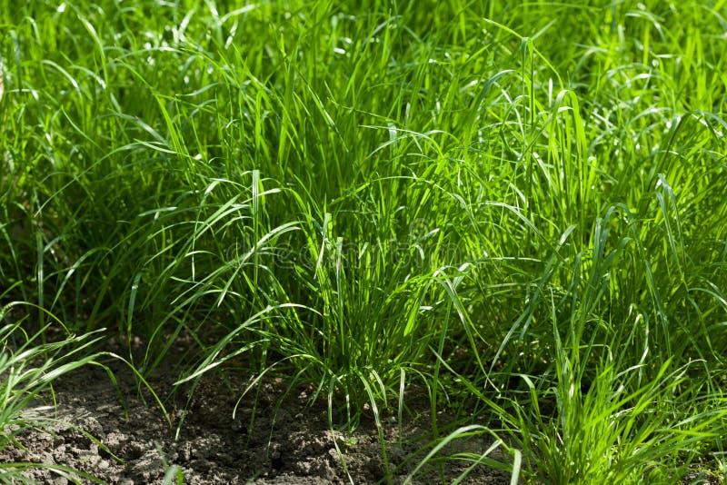 在耕种的草丛 库存照片