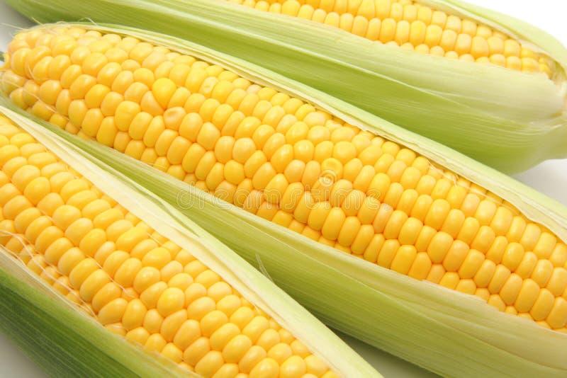 在耳朵的玉米 图库摄影