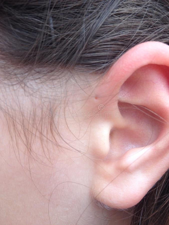在耳朵鱼鳃的孔 图库摄影