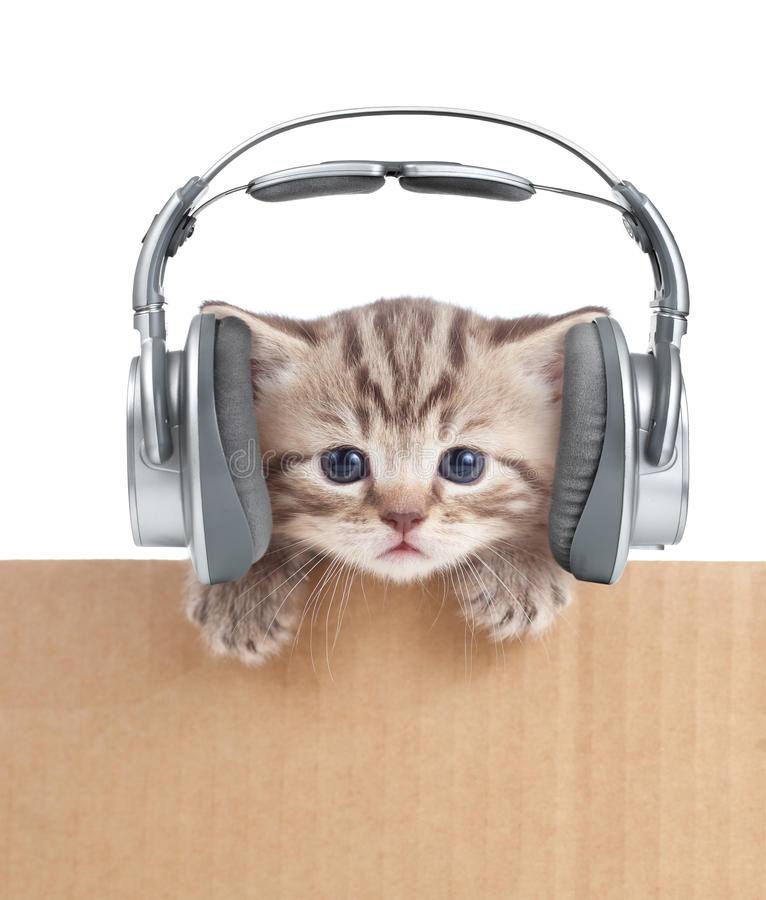 在耳机的滑稽的小猫猫在纸板箱 免版税库存图片