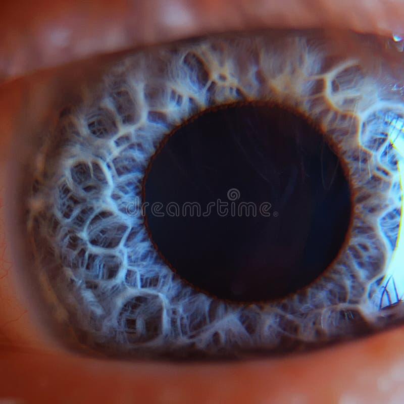 在肉眼的视网膜 免版税库存照片