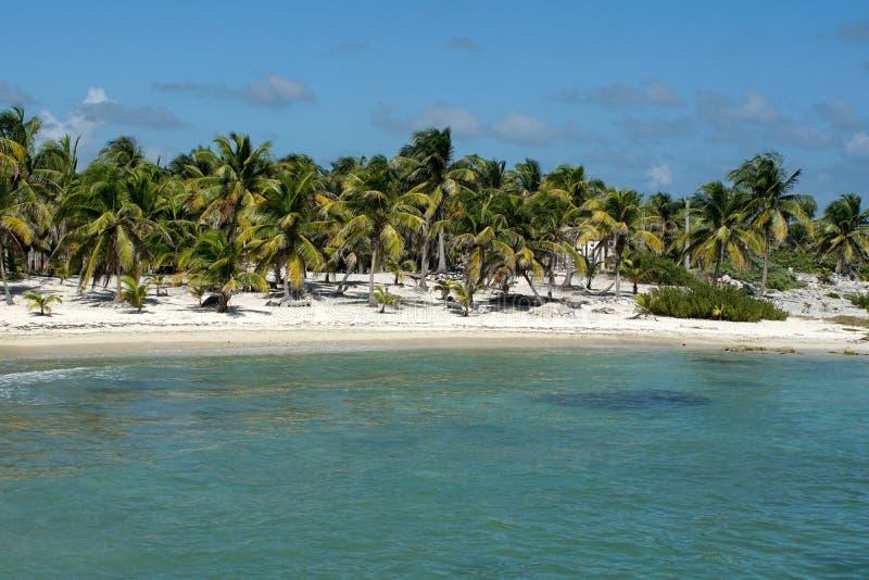 在肋前缘玛雅人,墨西哥的海滩 免版税图库摄影
