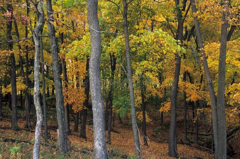 在肖象土墩国家历史文物,衣阿华的秋天叶子 库存照片
