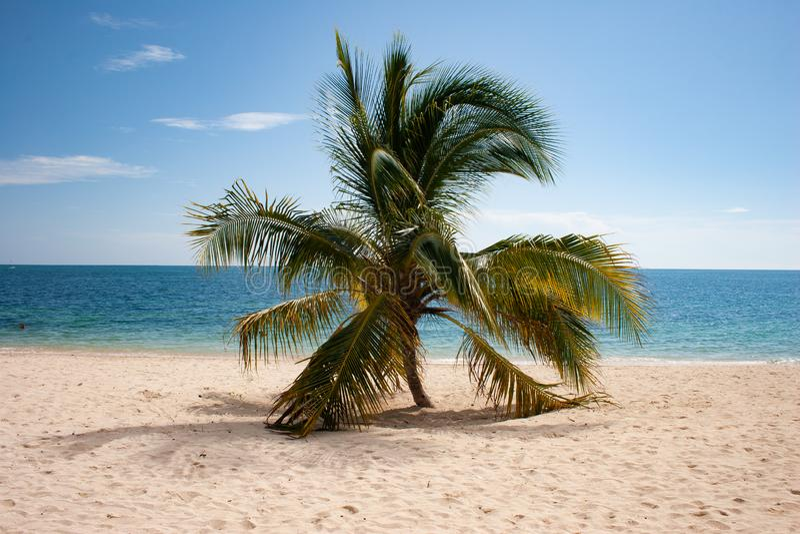 在肘海滩,特立尼达,古巴的被隔绝的可可椰子 库存照片