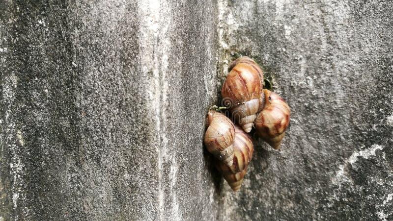 在肮脏的墙壁上的许多蜗牛 免版税库存图片